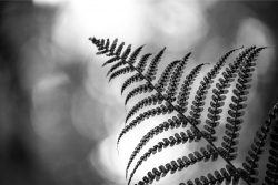 A fern displaying flexibility and scalability